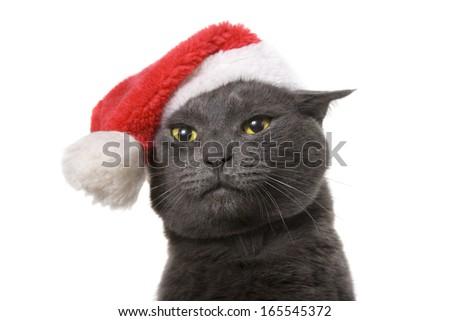 Funny Gray Cat Santa - Cute christmas cat, isolated on white background - stock photo