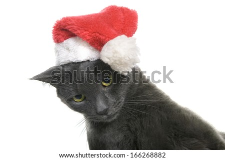 Funny Gray Cat Santa - Cute christmas cat isolated on white background - stock photo