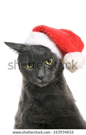 Funny Gray Cat Santa - Cute christmas cat, on white background - stock photo