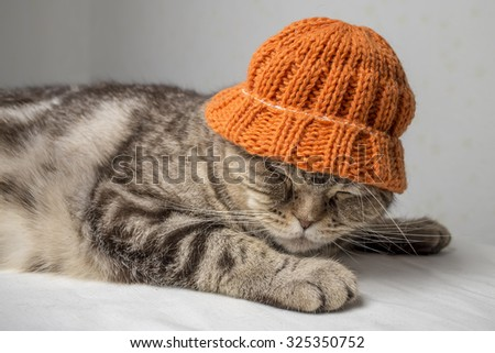 funny gray striped scottish fold cat with orange winter hat on his head lies on a table covered with a white cloth and sleeping - stock photo