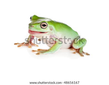 Funny green tree frog pulling faces isolated on white - stock photo