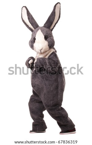 Funny grey rabbit isolated on white background
