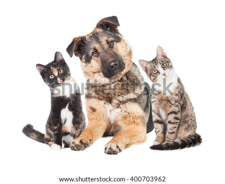 Funny group of two cats and one dog with heads turned into one side  - stock photo