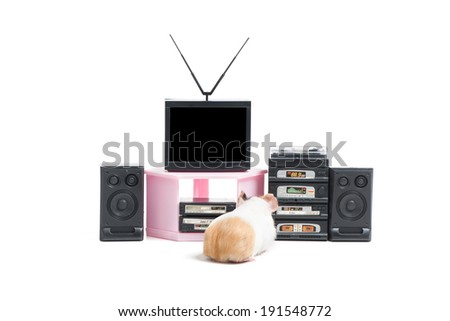Funny hamster. Rear view of hamster watching TV. Isolated on white - stock photo