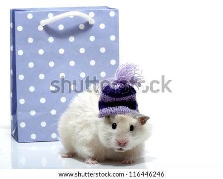 Funny hamster with woollen cap - stock photo