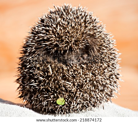 funny hedgehog ball with eyes and nose closeup - stock photo