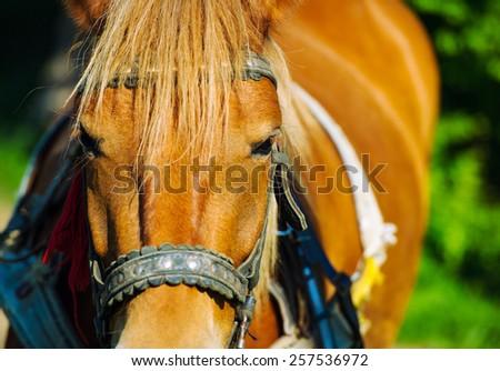 Funny horse - stock photo