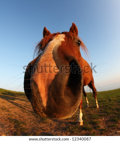 funny horse by fisheye lens  and blue sky - stock photo