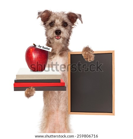 Funny image of a cute terrier dog holding a stack of books with an apple for the teacher and a blank chalkboard sign - stock photo