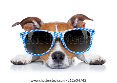 funny jack russell wearing bavarian sunglasses sitting on the ground , isolated - stock photo