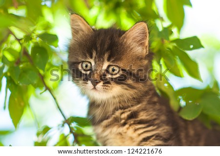 Funny kitten - stock photo