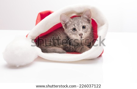 Funny kitten a cap of Santa Claus on a light background in studio - stock photo