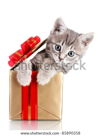 Funny kitten in golden gift box isolated on white - stock photo