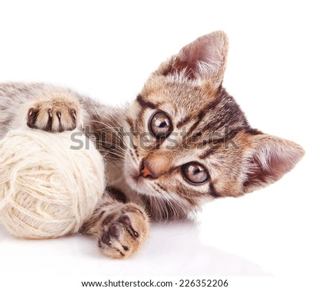 funny kitten playing with white ball