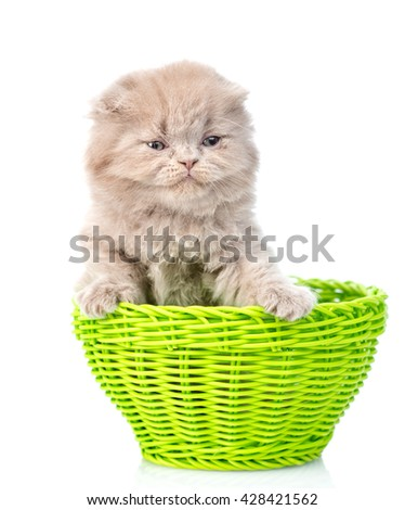 Funny kitten sitting in green basket. isolated on white background - stock photo