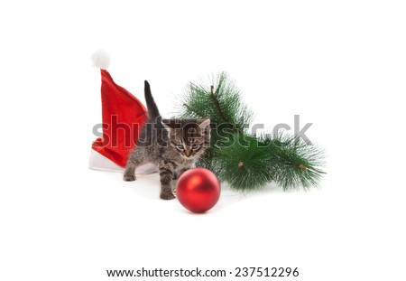 Funny kitten with Santa's hat, branch of fir and new year ball playing on white