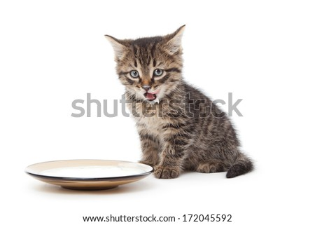 Funny kitten with sour cream on his lips - stock photo