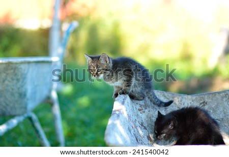Funny kittens - stock photo