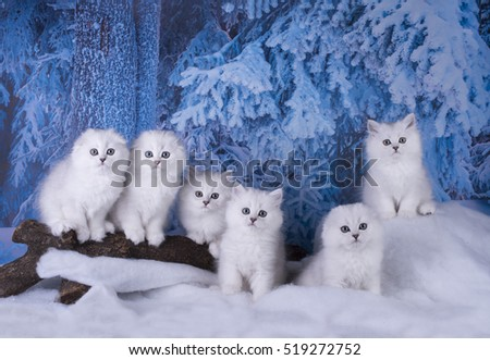 funny kittens on the winer background