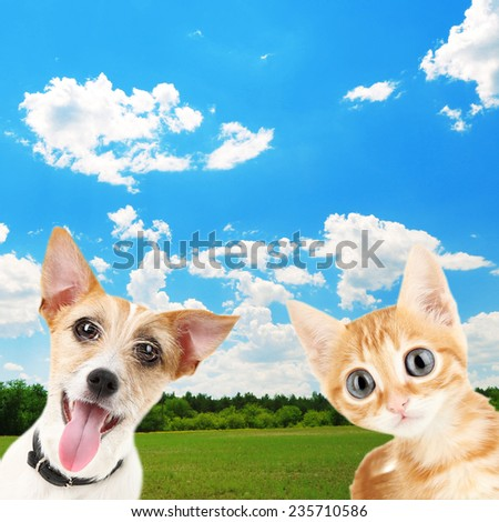 Funny little dog Jack Russell terrier and little red kitten outdoors - stock photo