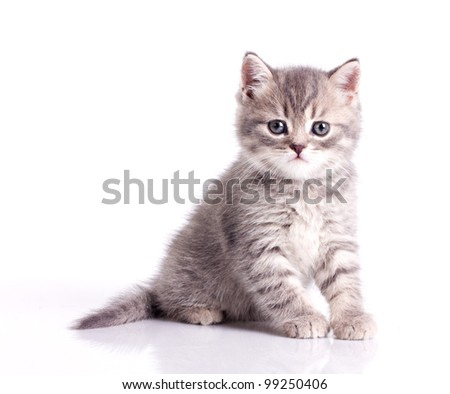 funny little grey kitten isolated on white - stock photo