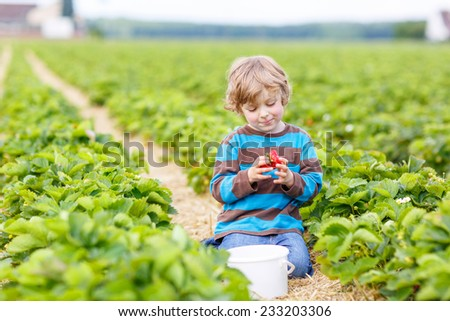 Funny little kid picking and eating strawberries on organic bio berry farm in summer, on warm sunny day. Harvest fields in Germany. - stock photo