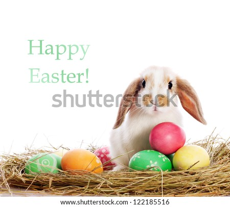 Funny little rabbit among Easter eggs in velour grass isolated on white - stock photo