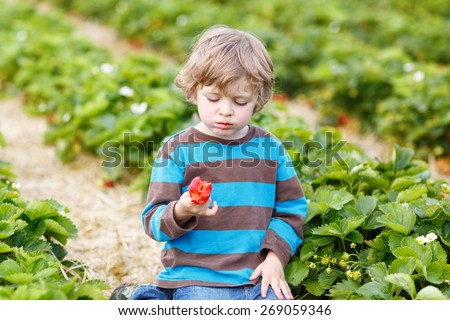 Funny little toddler child picking and eating strawberries on organic bio berry farm in summer, on warm sunny day. Harvest fields in Germany. - stock photo