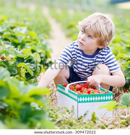 Funny little toddler child picking and eating strawberries on organic bio berry farm in summer, on warm sunny day. Harvest fields in Germany. Gardening, harvesting, family, kids lifestyle concept - stock photo