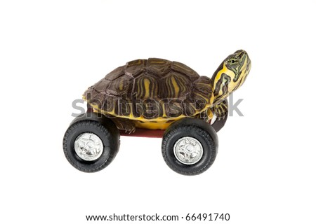 Funny little turtle using four wheels to gain speed - stock photo