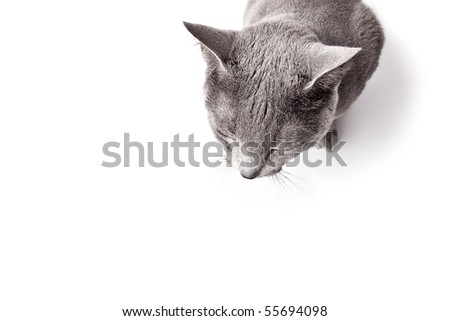 Funny looking cat isolated on white studio shot - stock photo