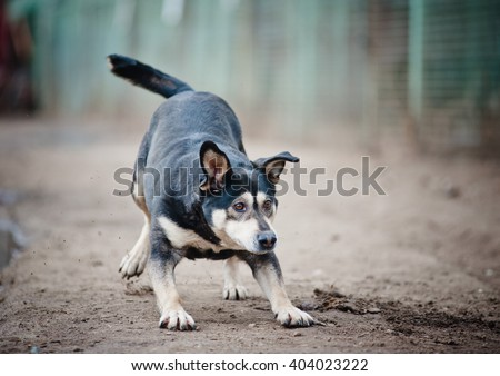 funny mixed breed dog playing outddors