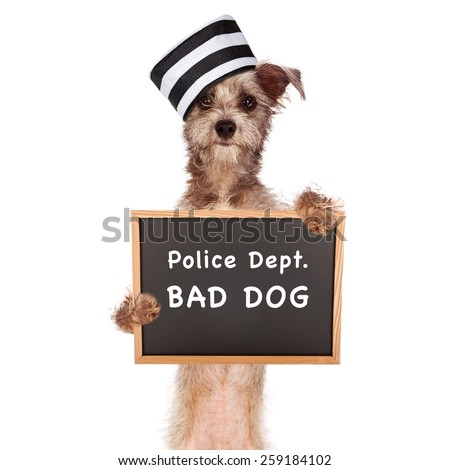 Funny mugshot image of a bad dog wearing a prisoner hat holding a booking sign - stock photo