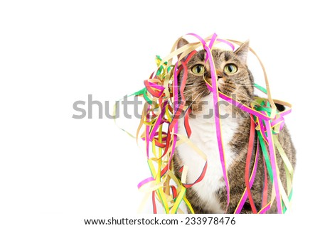 funny party cat - stock photo