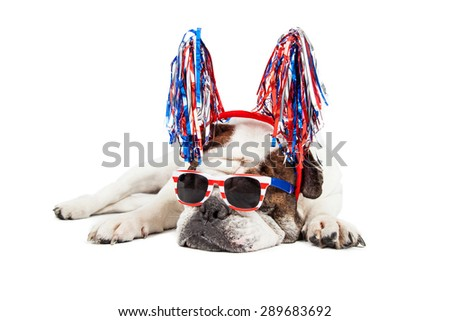 Funny photo of a Bulldog breed dog wearing red, white and blue sunglasses and pom-pom headband - stock photo