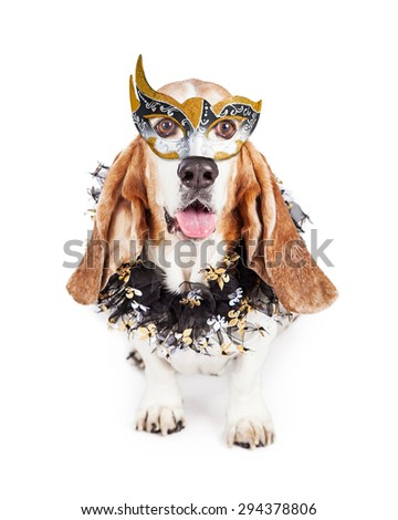 Funny photo of a happy Basset Hound breed dog wearing a black and gold Mardi Gras celebration mask and neck garland - stock photo