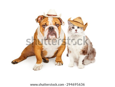 Funny photo of an English Bulldog breed dog and a cat wearing western cowboy hats - stock photo