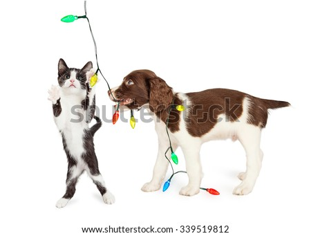 Funny photo of playful kitten and puppy playing with a string of Christmas lights - stock photo
