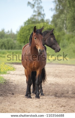 Funny picture of two headed horse (one standing behind another)