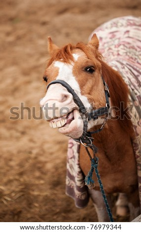 Funny portrait of laughing horse - outdoor scenery - stock photo