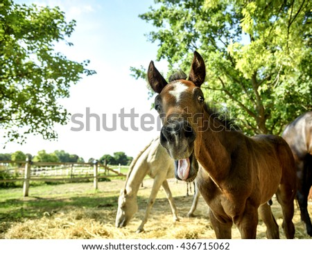 Funny portrait of young chestnut horse - stock photo