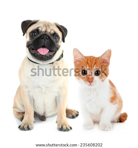 Funny pug dog and little red kitten isolated on white - stock photo