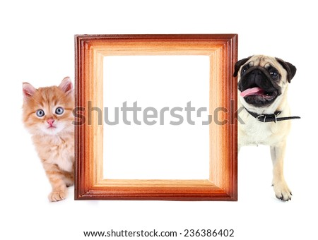 Funny pug dog and little red kitten with frame isolated on white - stock photo