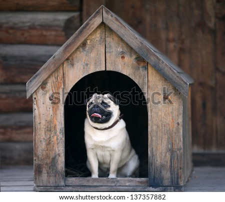 Funny pug dog in the dog house - stock photo