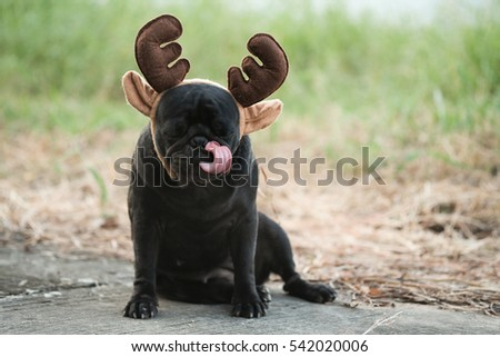 Funny pug dog wearing reindeer headband for christmas.