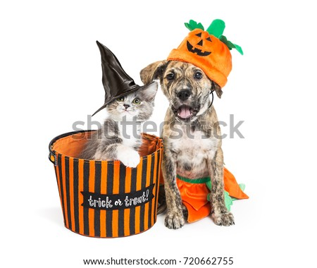 funny puppy and kitten in halloween costumes with basket