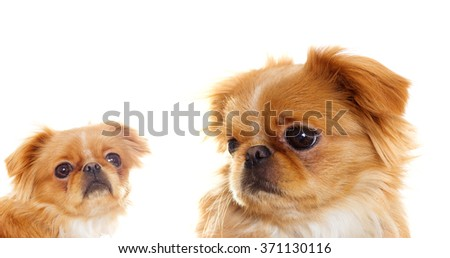 Funny puppy looks - stock photo