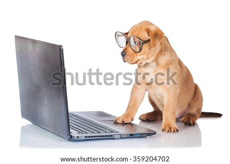 Funny puppy with glasses in front of a laptop