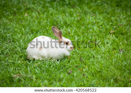 Funny rabbit on green grass.