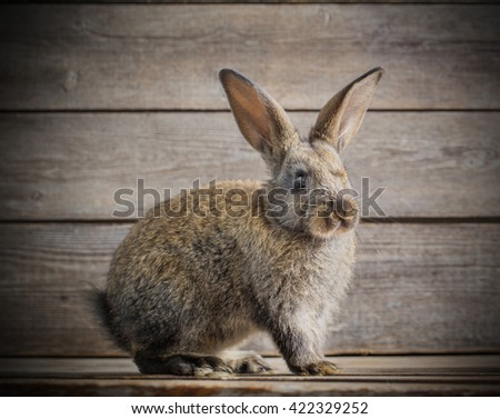 funny rabbit on wooden background - stock photo